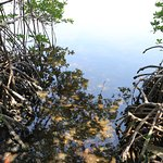 Lots of lovely water views with mangroves.