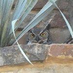 Nesting owl!