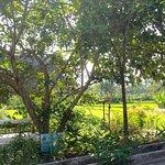 Foto de Warung Pulau Kelapa