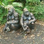 Gorilla Buddies