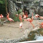 Pink Birds...