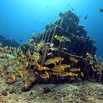 pryamids dive site