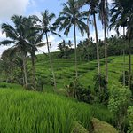 Foto de Jatiluwih Green Land