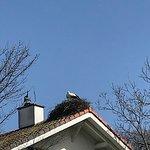A Altreu, les cigognes sont une attraction