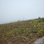 Photo of Monte Verde