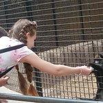 Monkey Park Foto