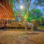 Kudu at the deck at night