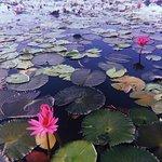 ทะเลน้อย พัทลุง :) โลกใบเล็กที่ธรรมชาติยังสวยงามอุดสมบูรณ์มาก  รักเลย