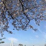 いろんな種類の桜がとっても綺麗です!