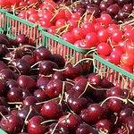 20 Valley Harvest Farms