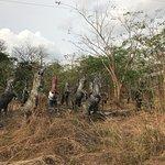 Black Stallion Eco Park & Estates resmi