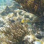 Foto de Parque Nacional Arrecife Puerto Morelos