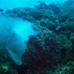 Spawning of the coral