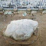 Plymouth Rock Foto