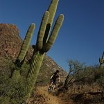 Tear up the trail between 150 year old Saguaros!
