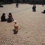 Piazza del Campo Foto