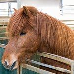 Eld Hestar Horseback Tours의 사진