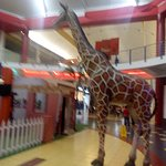Photo of Albrook Mall