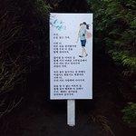 제주김녕미로공원의 사진