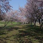 北浅羽桜堤公園:桜並木