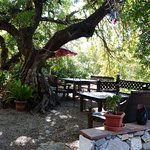 "Top Terrace, ""Under the Carob Tree"""