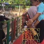 Фотография PD Ostrich Show Farm