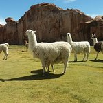 Photo of Expediciones Estrella Del Sur Bolivia