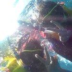 Foto de Bali Aqua Diving