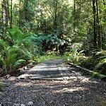 Rainforest walk to the waterfall.