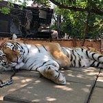 Hua Hin Safariの写真