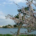 Photo of Tokiwa Park