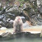 Photo of Jigokudani Snow Monkey Park