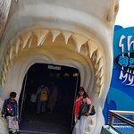 entering the aquarium
