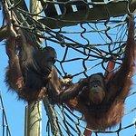 Photo de Monkey World