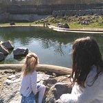Penguin enclosure