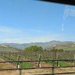 Foto de Sustainable Vine Wine Tours