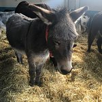 Honkey the Donkey!