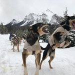 The dogs are so excited to be racing the sled. You can tell they are well cared for.