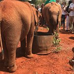 Photo de David Sheldrick Wildlife Trust
