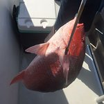 Nice Red Snapper!