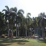 Those beautiful palm trees!