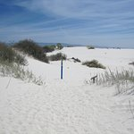 White Sands National Monument -Dune Life Nature Trail