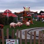 Old Macdonald's Farm Rides PIc