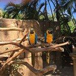 Photo de Palm Beach Zoo & Conservation Society