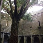 The Abbey in Killarney National Park,take a walk and view the Abbey it's free of charge !!