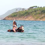 swimming with our horses in St. Lucia