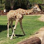 Wildlife World Zoo and Aquarium
