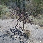 One of the funky cacti on the trail.
