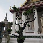 Árbol y templo