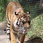 San Diego Zoo Safari Park Foto